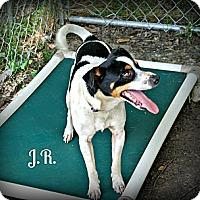 Adopt A Pet :: J.R. - Vancleave, MS