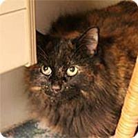 Adopt A Pet :: Khyli - Gilbert, AZ