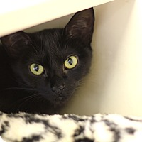 Adopt A Pet :: Curly - Chicago, IL