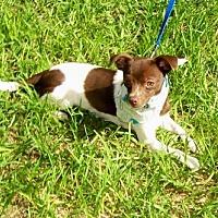 Adopt A Pet :: Eddie - ocala, FL