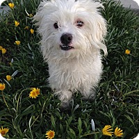 Adopt A Pet :: Marco - Mission Viejo, CA