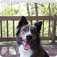 Adopt A Pet :: Luna - Bristol, TN