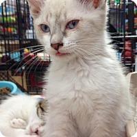Adopt A Pet :: Binky - Redondo Beach, CA