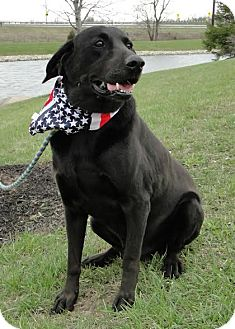 Labrador Retriever Mix Dog for adoption in Brattleboro, Vermont - Vinnie