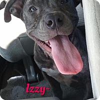Adopt A Pet :: Izzy - Cheney, KS