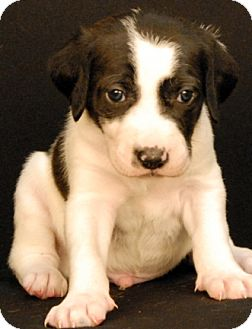 Hound (Unknown Type) Mix Puppy for adoption in Newland, North Carolina - Grimm