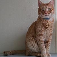 Adopt A Pet :: MEMITO - Dallas, TX