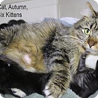 Adopt A Pet :: Autumn - Temecula, CA