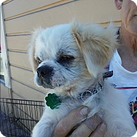 Adopt A Pet :: Marcelo - San Francisco, CA