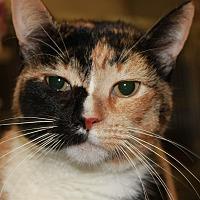 Adopt A Pet :: ROSE - Clayton, NJ