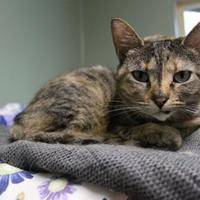 Adopt A Pet :: Wilma - Houghton, MI