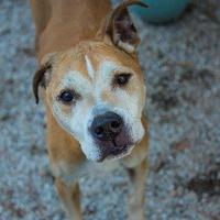 Adopt A Pet :: Malocchio - Decatur, GA