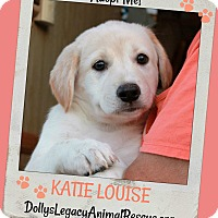 Adopt A Pet :: KATIE LOUISE - Lincoln, NE