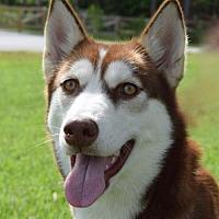 Adopt A Pet :: Misha - Jupiter, FL