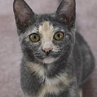 Adopt A Pet :: Sylvie - Huntsville, AL