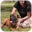Photo 2 - Bullmastiff Dog for adoption in Phoenix, Arizona - WILLIE