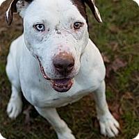 Adopt A Pet :: Jack - Rockaway, NJ