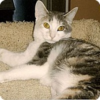 Adopt A Pet :: Maya - Medway, MA