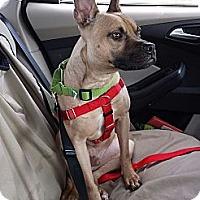 Adopt A Pet :: Campbell - Clarksburg, MD