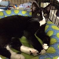 Adopt A Pet :: Ruthie - Byron Center, MI