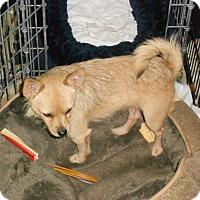 Adopt A Pet :: TWIX & POOKIE - Raleigh, NC