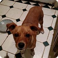 Adopt A Pet :: Bobbie - Simi Valley, CA
