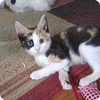 Adopt A Pet :: Kasey - Lenhartsville, PA