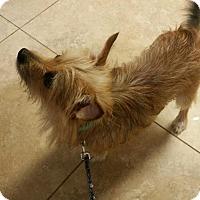 Adopt A Pet :: Tobi - Oviedo, FL