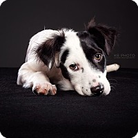 Adopt A Pet :: Violet - Knoxville, TN