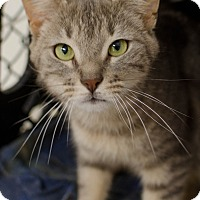 Adopt A Pet :: Simone - Greenwood, SC