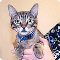 Adopt A Pet :: Joe - Wildomar, CA