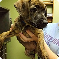 Adopt A Pet :: Lulu - Columbus, GA