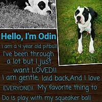 Adopt A Pet :: Odin - Lorain, OH