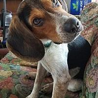 Adopt A Pet :: Logan-ADOPTION PENDING! - Wood Dale, IL
