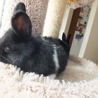 Adopt A Pet :: Halo - Edmonton, AB