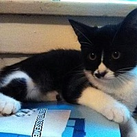 Adopt A Pet :: Charley - Long Beach, CA