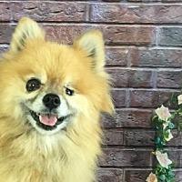 Adopt A Pet :: Coral - Dallas, TX