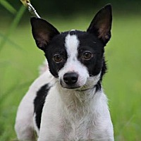 Adopt A Pet :: Max/MS - Columbia, TN