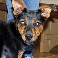 Adopt A Pet :: Jackie - Southbury, CT