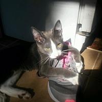 Adopt A Pet :: Harrison - Centerton, AR