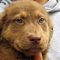 Adopt A Pet :: Roosevelt - Germantown, MD