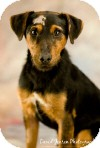 Terrier (Unknown Type, Small) Mix Dog for adoption in Anchorage, Alaska - Hans