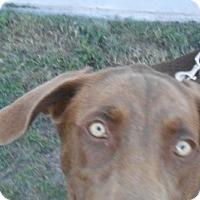 Adopt A Pet :: Mocha - Lockhart, TX