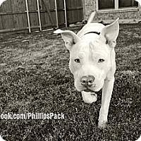 Adopt A Pet :: ROCCO - Colleyville, TX