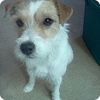 Adopt A Pet :: Dublin in Dallas - Oklahoma City, OK