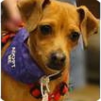 Adopt A Pet :: Itty Bitty - Beachwood, OH