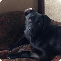 Adopt A Pet :: Emmit - Winchester, VA