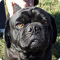 Adopt A Pet :: Max - Huntingburg, IN