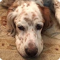 Adopt A Pet :: Parker - Wood Dale, IL
