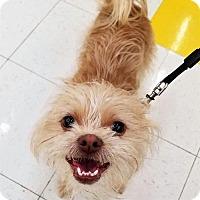Adopt A Pet :: Cody - Buffalo, NY